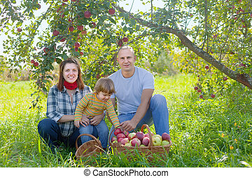 family with apple harvest in orchard