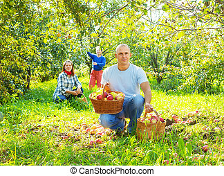 family with apples harvest in garden