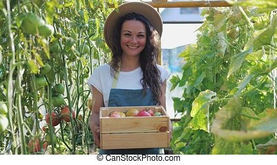Happy farmer in hat with the produce from the tomato garden. Gardener holds wooden box with tomatoes. Tomatoes ripening in a greenhouse. Ripe and unripe grape tomatoes farm, Fresh tomatoes plants.