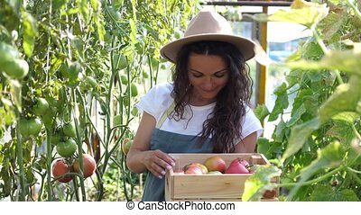 Happy farmer in hat with the produce from the tomato garden. Holds tomato in hand. Tomatoes ripening in a greenhouse. Ripe and unripe grape tomatoes farm, Fresh tomatoes plants.