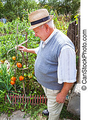 Happy farmer proud of his tomato cultivation