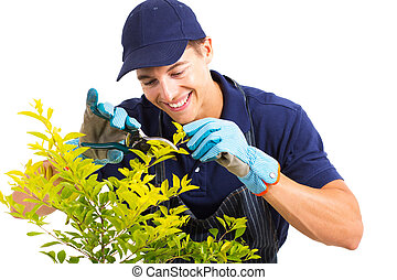 gardener pruning a plant on white - happy gardener pruning a...