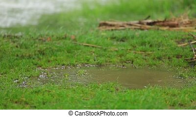 Happy Girl Jumping In Muddy Pool