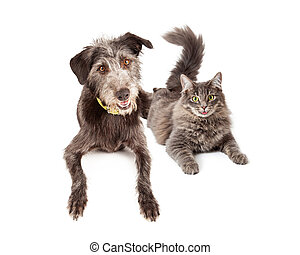 Happy Grey Cat and Dog Laying Together