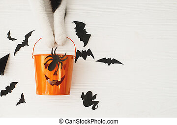 Happy Halloween! Cat paws holding Jack o lantern candy bucket on white background with bats, celebrating halloween at home. Top view with space for text.