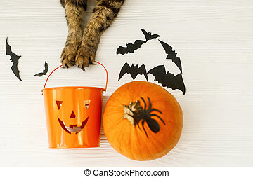 Happy Halloween! Cat paws holding Jack o lantern candy bucket on white background with pumpkin, bats, celebrating halloween at home. Top view with space for text.
