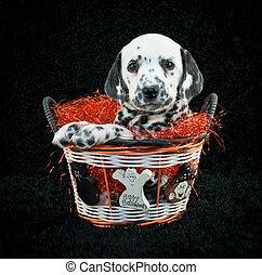 Happy Halloween Puppy