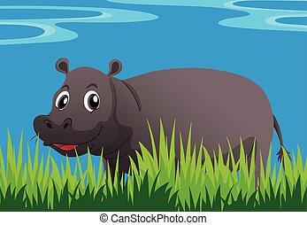 Happy hippo in the garden