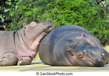 Happy hippopotamus friends