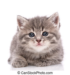 Happy kitten looking at camera. White background.