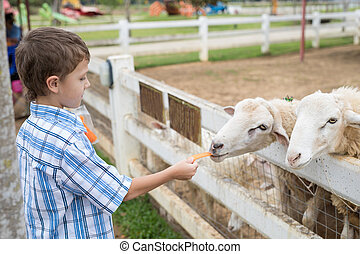 Happy little boy feeding sheep in a park at the day time. Kid having fun otdoors. Concept of good leisure.