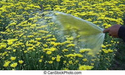 Happy man watering flower and plants in garden.