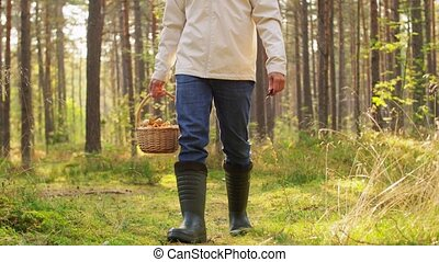 happy man with basket picking mushrooms in forest - picking ...