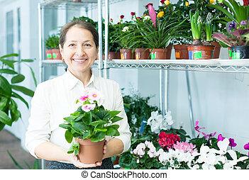 mature woman chooses auricula (Primula) - Happy mature woman...