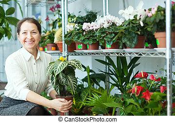 Happy mature woman looks Aphelandra plant at flower store
