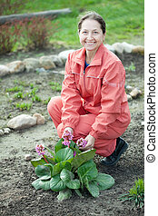Happy mature woman with Bergenia plant