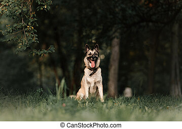 happy mixed breed dog in a collar sitting outdoors in summer
