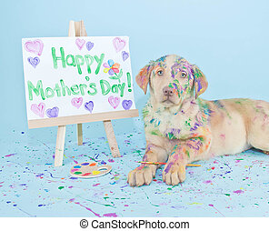 A sweet little Lab puppy that looks like he just made a mess painting a picture for Mom.