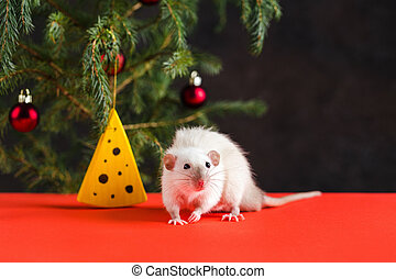 Happy New Year 2020. Christmas composition with a real rat, symbol of the year. Rat at the Christmas tree with toys and artificial cheese
