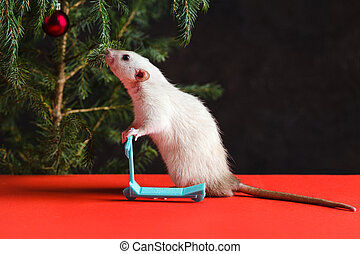 Happy New Year 2020. Christmas composition with a real rat, symbol of the year. Rat on a mini scooter near a Christmas tree with toys