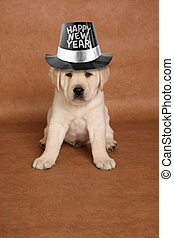 Happy new year - Happy New's year puppy with a funny ...