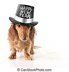 Happy new year - Soaking wet puppy wearing a Happy New Year...