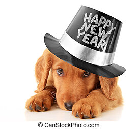 Happy New Year puppy - Shy puppy wearing a Happy New Year...