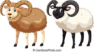 Happy norfolk horn sheep on white background