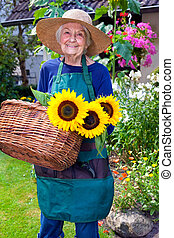 Happy Old Woman with Basket Harvesting Sunflowers
