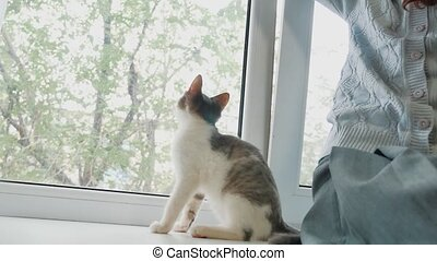 happy plays child girl with her cat sitting window sill at...
