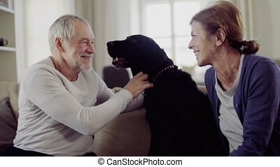 Happy senior couple sitting on a sofa indoors at home, playing with a dog.