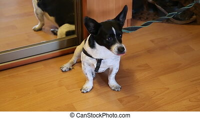 small mongrel dog in the house - Happy small mongrel dog in...