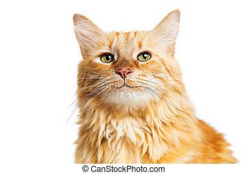 Happy Smiling Orange Tabby Cat