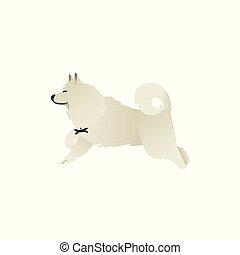Happy smiling white fluffy dog running isolated on white background.