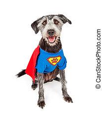 Happy Super Hero Terrier Dog