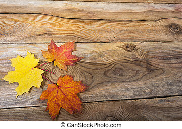 Happy Thanksgiving rustic greeting with fall maple leaves