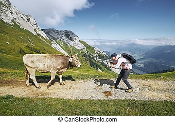 Happy traveler with cow in mountain - Young man ...