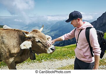 Happy traveler with cow in mountain - Young man stroking ...