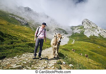 Happy traveler with cow in mountain - Young man walking with...