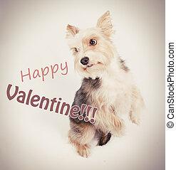Happy valentine dog