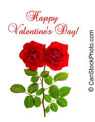 Happy Valentines Day Red roses white background