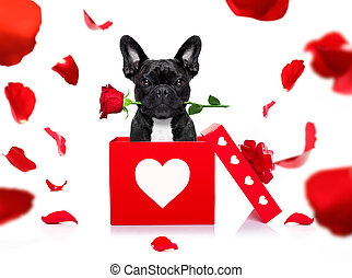 happy valentines dog - french bulldog dog in love for happy...