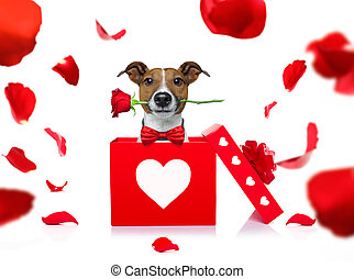 happy valentines dog - jack russell dog in love for happy...