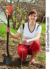 woman planting fruit tree