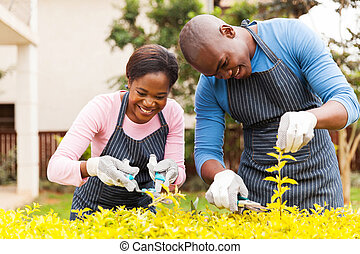 young african couple trimming plants