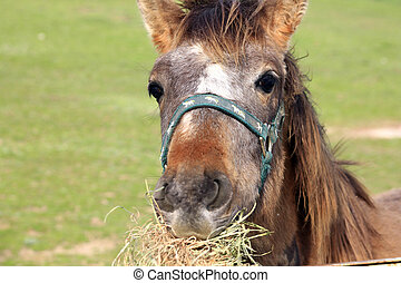 Happy young horse eating
