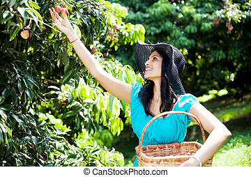 young woman picking lychees in litchi