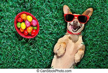 hapy, perro, huevos de pascua