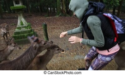 Harassing Nara deer - Tourist woman harassed by hungry wild...