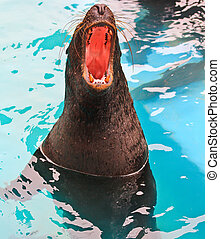 harbor seal zoo